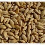 Предлагаем семена канадского ярового ячменя - сорт «Дункан», 1 репродукция