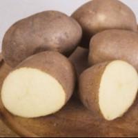 Картофель Инноватор