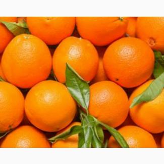 Апельсины урожай октябрь 2018