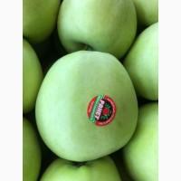Продам яблука оптом урожай 2019, Закарпатська обл