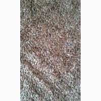 Продам семена льна масличного