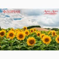 Соняшник Флоріан (105 днів)