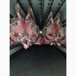Suspension of chilled Beef quarters (HALAL) - Подвес охлажденной говядины комп./четверти