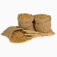 Купим пшеницу крупным оптом. Вся Украина