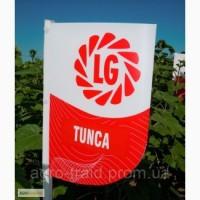 Семена подсолнечника Тунка (Tunca), Днепропетровская область