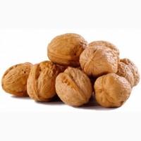 Куплю грецкий орех дорого