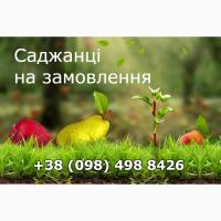 Продаю саджанці кущів та дерев смородини, малини, полуниці, винограду