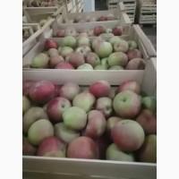 Яблоки Симиренко, Голден сетевого качества, 15+ сортов - ОПТ от 10тн с холодильника