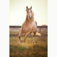 Куплю лошадей живым весом