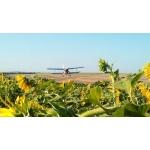 Десикация кукурузы и подсолнечника самолетом Ан-2