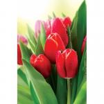 Тюльпаны оптом