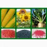Продам насіння соняшника власної селекції
