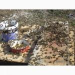 Весення подкорика пчел после облета