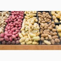 Фермерское предприятие продаст картошку отличного качества Белла Роса