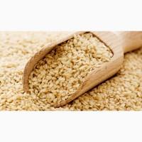 Семена кунжута сырого белого Индия - для кондитерского производства