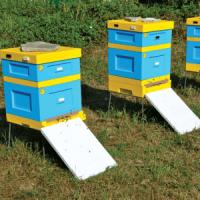 Куплю пчелосемьи. Пчелопакеты. сушь. медогонку
