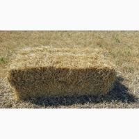 Солома (пшеничная) в тюках