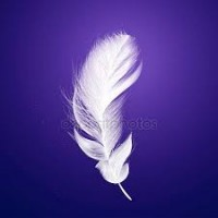 Продам перья гусиные (НОВЫЕ)