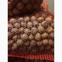 Продам целый калиброванный грецкий орех 2019 года | Selling a whole calibrated walnut 2019