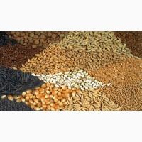 Доработка зерновых культур, услуги фотосепаратора