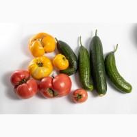Овочі від Уманського Тепличного Комбінату (Перший сорт)