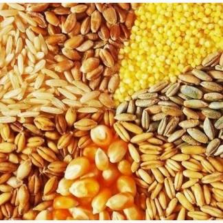Продажа зерновых: пшеница, кукуруза, ячмень