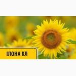 Соняшник Iлона КЛ