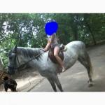 Срочно продам лошадку
