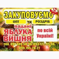 Закупаем яблоки-паданки, вишню оптом и в розницу по всей Украине