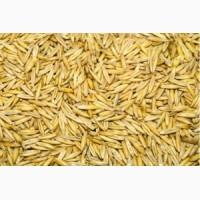 Купуємо зерно проса, овса, ячменю, гречки, пшениці