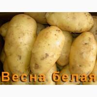 Продам картошку, элитные сорта есть 350т