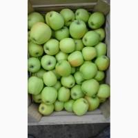 Продам яблоко Грени Смит