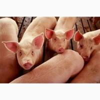Премикс для свиней откорм