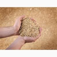 Закупаем Пшеницу с места от 60т