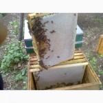 Продам мёд лесной из липы
