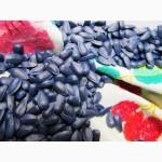 Продажа гибридов подсолнечника, семена под гранстар, гибриды евролайтинг