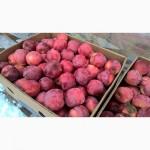 Продаємо яблука різних сортів, Хмельницька обл