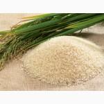Рис оптом круглый и длинный, от производителя НОВЫЙ УРОЖАЙ
