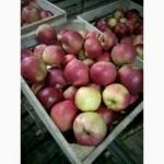 Продам яблука, НИЗЬКА ЦІНА, розпродаж
