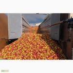 Консервний завод закуповує яблуко для переробки