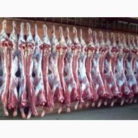 Продам полутуши говяжьи