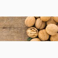 Продаем грецкий орех кругляк бойный