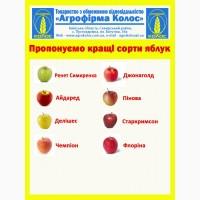 По хорошей цене продадим Яблоки агрофирма:Колос