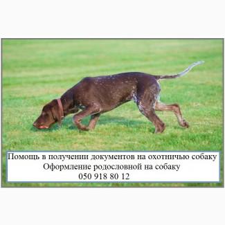 Как оформить собаку для охоты Документы на право охоты с собакой