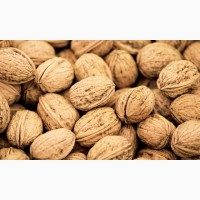 Закупаем Грецкий орех урожая 2020г