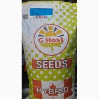 Семена Кукурузы G-Host (КАНАДА) урожай 2016 года
