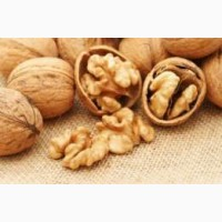 Закупаем ядро ореха на экспорт