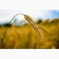 Продажа агробизнеса