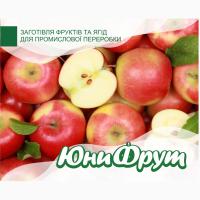 Куплю яблоки на переработку от 20 тонн