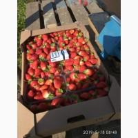 Продам клубнику